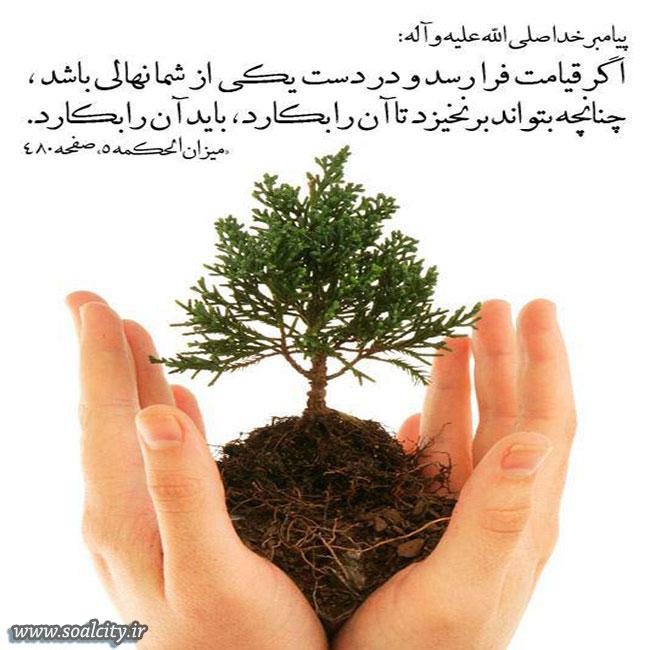 سفارش اسلام به درختکاری