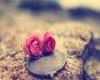 نقش عشق در ازدواج